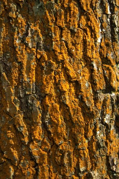Tree Bark by HuddersfieldHil