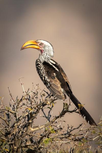 Hornbill Heaven by NickDale