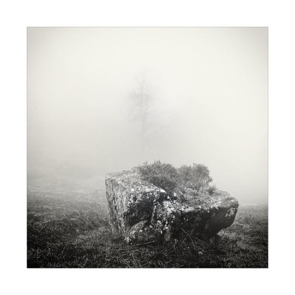 2021, A Woodland Odyssey by gerainte1