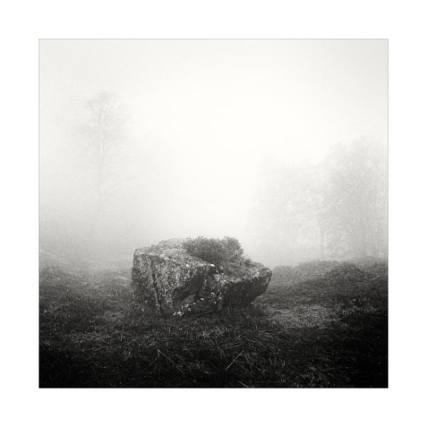 2021, A Woodland Odyssey 2 by gerainte1