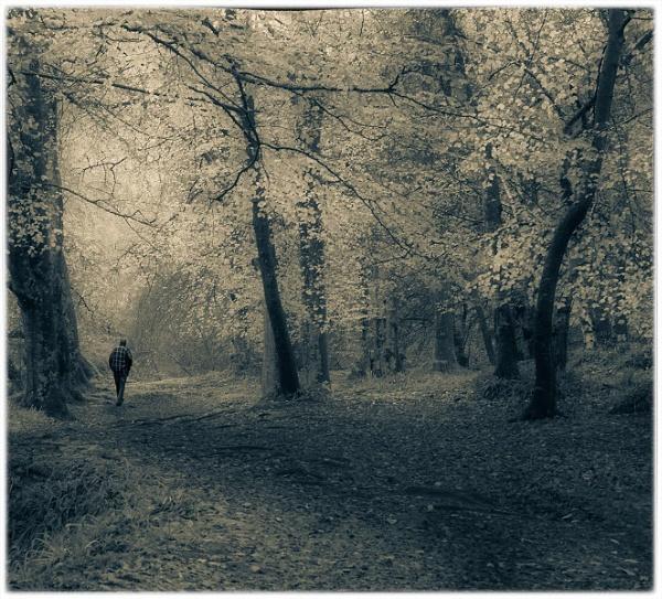 Solitude by MalcolmM