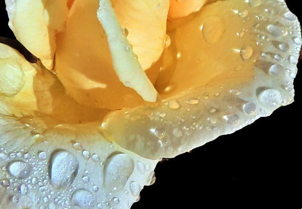 Tiny bubbles by IamDora