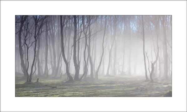 Bolehill Mist by Steve-T