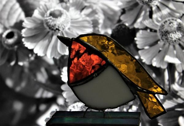 Robin by helenlinda