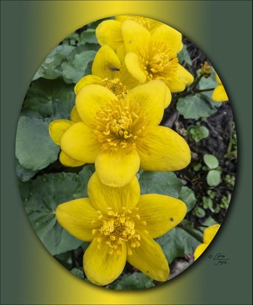 A Springkling by LynneJoyce