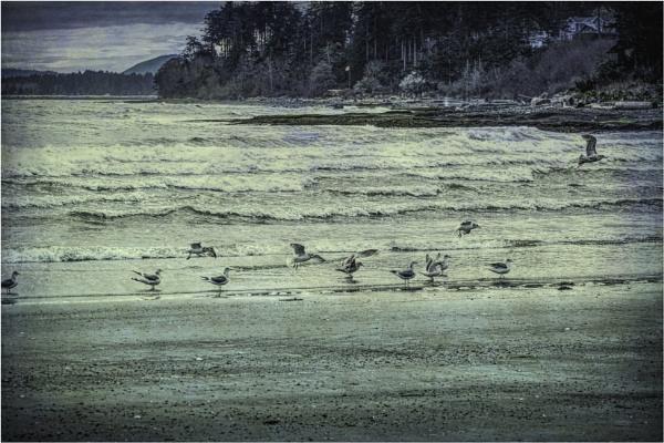 Onto the Beach by Daisymaye