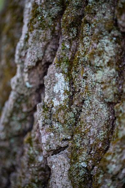Lichen by Merlin_k