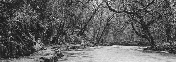 Bedlington Woods by nstewart