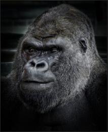 King Kong (6)