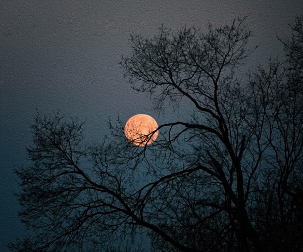 Monet\'s Moon by mlseawell