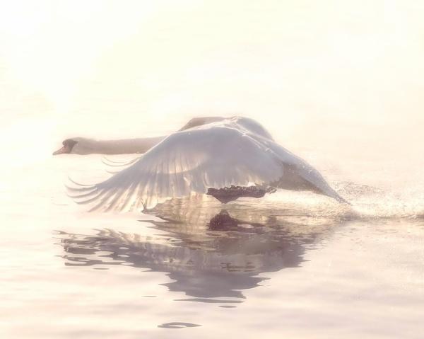 Water Surfing by sweetpea62