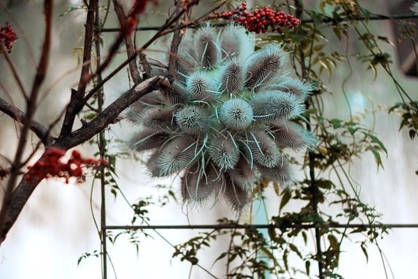 Bloom by manicam