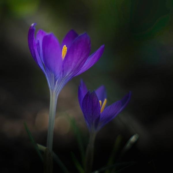 Purple & Blue by 2479