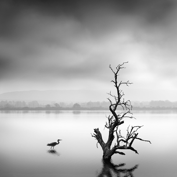 Pure Silence by Diggeo