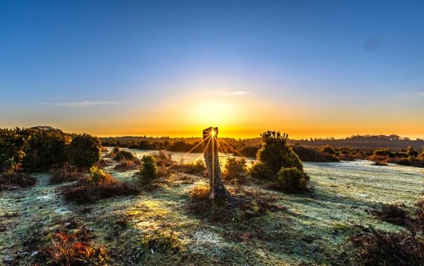Split Trunk Sunrise by NickLucas