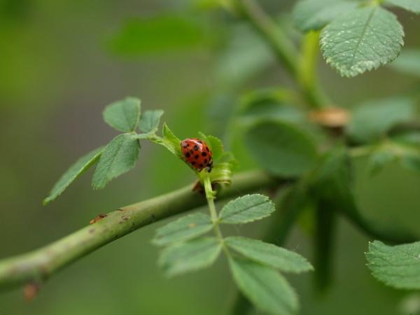 Ladybug by instone67
