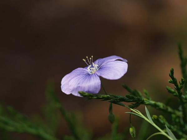Flower by instone67