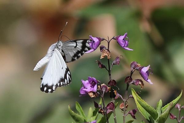 Butterfly by MJJ2810