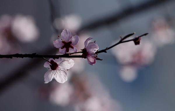 Spring 2021 by LaoCe