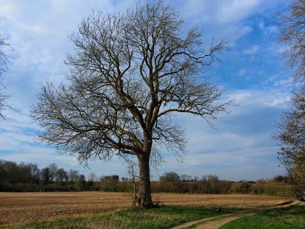 A tree by niknakpaddywhack