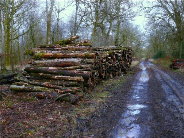A pile of wood in Savernake forest,Marlborough. by niknakpaddywhack