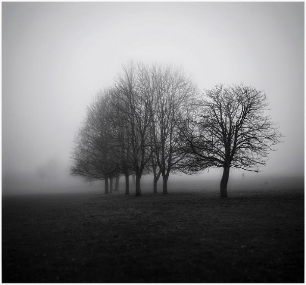 Parklands mist by Carlos9