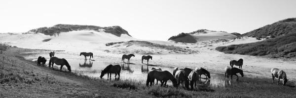 wild horses by bliba