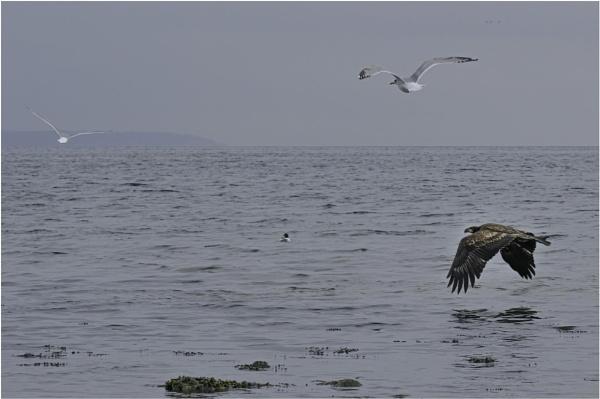 Fly Away by Daisymaye