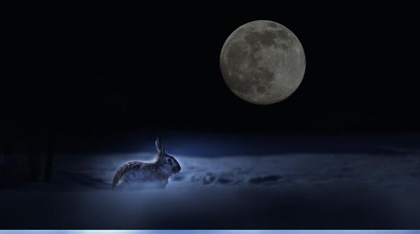 moon by MTT