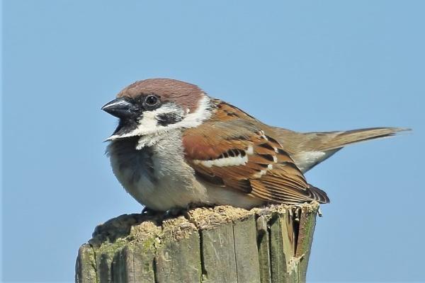 Post Sparrow... by TerryMcK