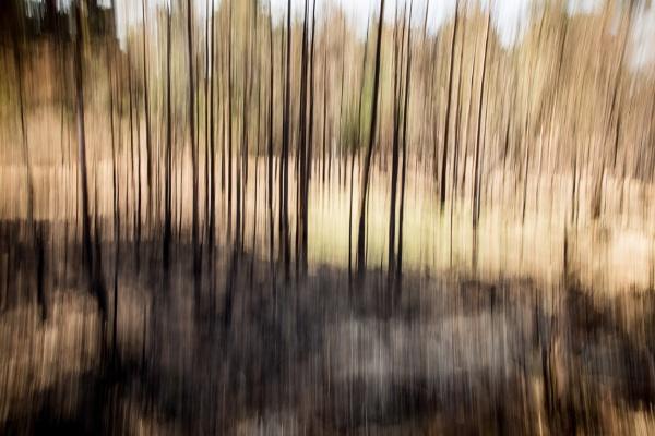 Burnt Trees by JackAllTog