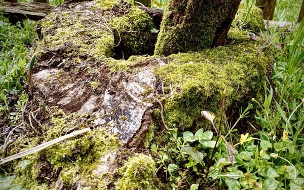Mossy by nclark
