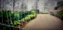 nature gate by atenytom at 06/04/2021 - 10:25 AM