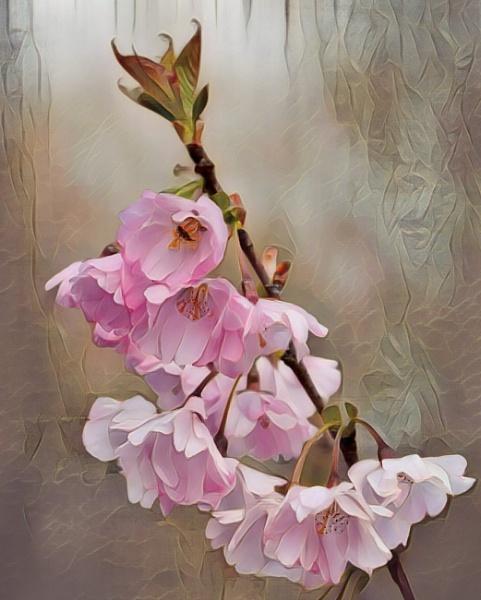 Spring Is Blooming by sweetpea62