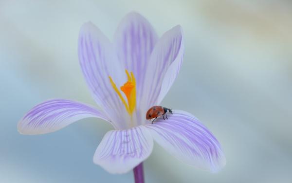 spring by ruurd