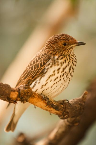 Smallish bird by tpfkapm