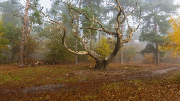 tree by rocky41