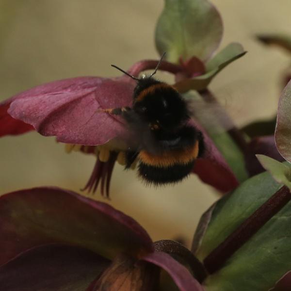 Busy bee by loobylyn