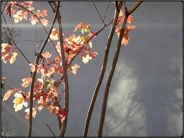 autumn sun still by FabioKeiner
