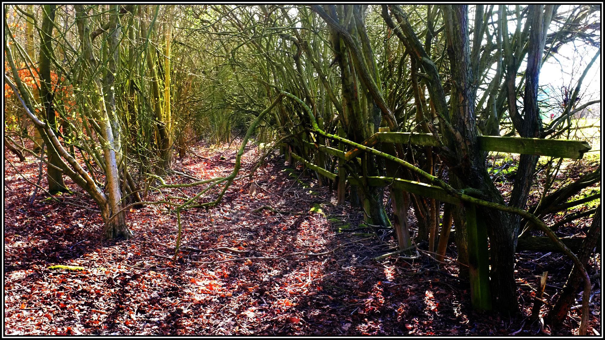 Abandoned footpath
