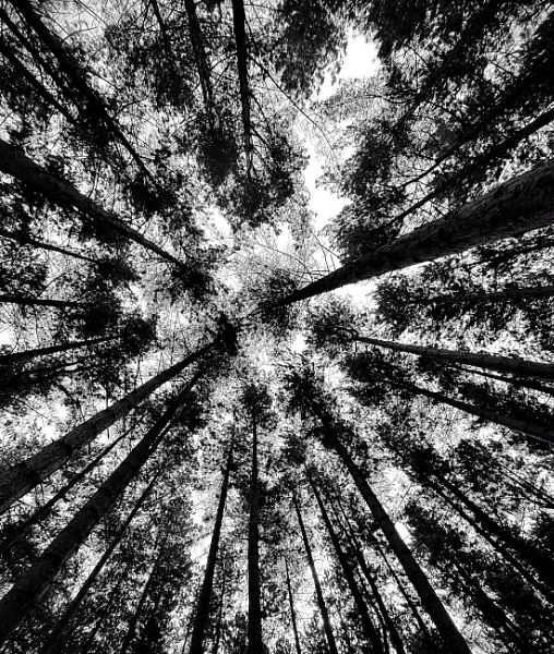 Circle of trees by lespaul