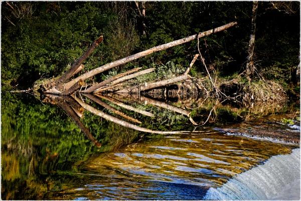 Fallen tree by jacomes