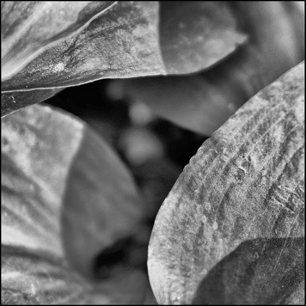 Wild Garlic.. by EveLine1