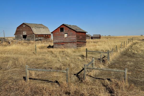 Nobody in the barnyard today by waltknox