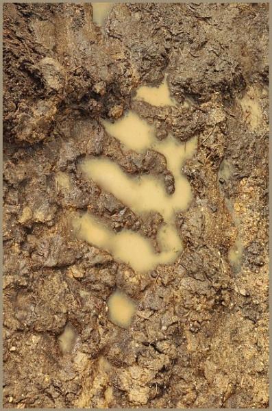 mud by leo_nid