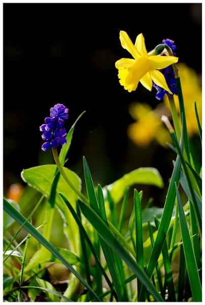 Spring has sprung by hsreid