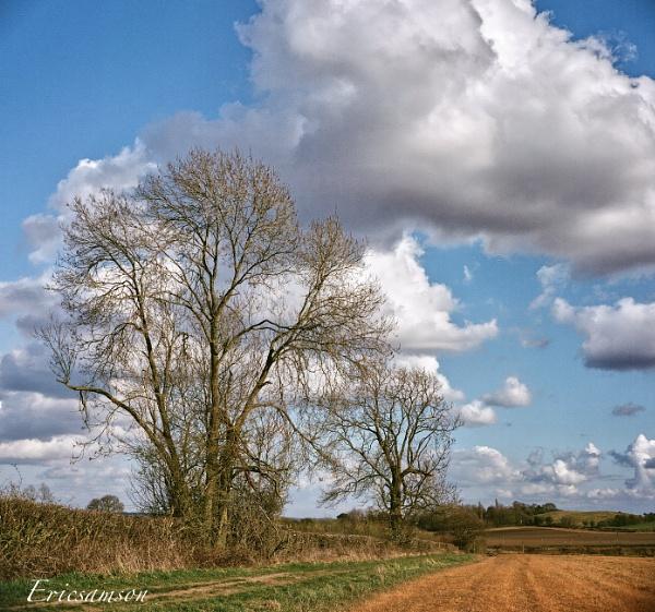 I talk to the trees ..... by Ericsamson