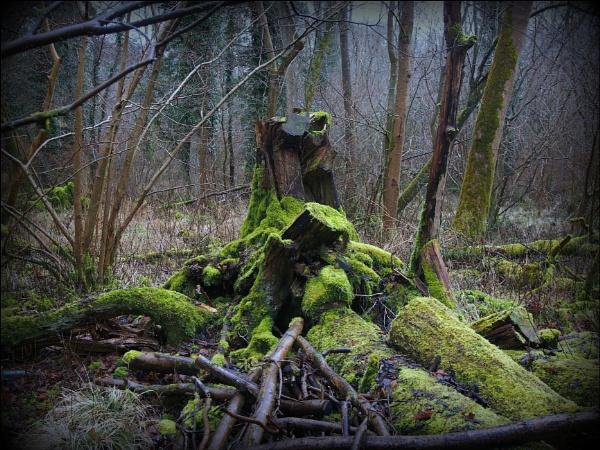 moss. by niknakpaddywhack