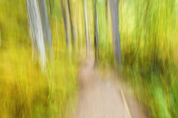Walking a woodland path.. by Merrysmaid