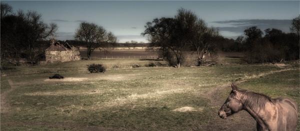 Down on the farm by KingBee